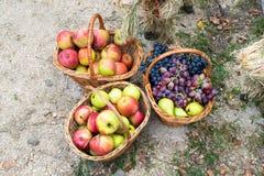 Korgar med äpplen, päron och druvor Korgar med frukt royaltyfri foto