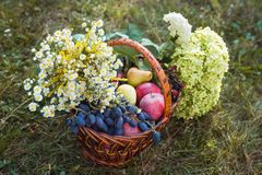 Korgar med frukter och blommor arkivfoto