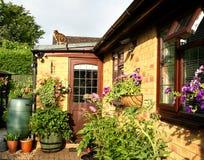 korgar som blommar planters Royaltyfri Foto