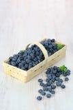 korgblåbär Royaltyfria Foton
