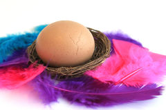 korgeaster ägg Arkivbild