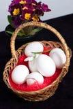korgeaster ägg blommar den fulla fjädern Arkivbilder
