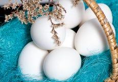 korgeaster ägg full Arkivfoton
