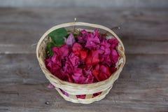 korgen blommar purple Arkivfoto