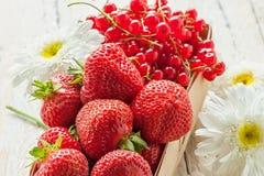 Korgen med mogna jordgubbar och röda vinbär dekorerade med stora tusenskönor Royaltyfri Foto