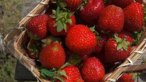 Korgen med mogna jordgubbar står på en tabell stock video