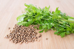 Koriander-Blätter und Samen Stockbild