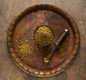 koriander torkat frö Royaltyfri Bild