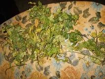 korianderbladöverkant av tabelltorkduken Royaltyfri Foto