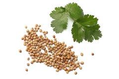 korianderbladeren en zaden op witte hoogste mening worden geïsoleerd die als achtergrond stock foto