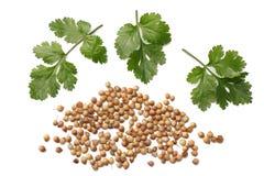 korianderbladeren en zaden op witte hoogste mening worden geïsoleerd die als achtergrond stock afbeeldingen