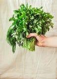 Koriandergreens in de hand van een vrouw Gezond en ruw Anti-oxyderend F royalty-vrije stock foto's