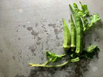 Koriandersidor och gröna organiska okror som isoleras på lantlig bakgrund medf?ljd stolpe f?r fotografi f?r mat f?r mapp f?r capt royaltyfri foto
