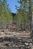 Koridir di agacli del corridoio dell'albero Fotografia Stock Libera da Diritti