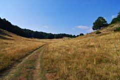 Koritnik del camino del valle Imagen de archivo libre de regalías