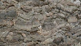 Kork tryckte på, en naturlig råvara, textur Royaltyfri Foto