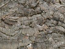 Kork tryckte på, en naturlig råvara, textur Royaltyfria Bilder