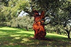 Korka skörden, röd korkek utan kork, Andalusia, Spanien Royaltyfria Bilder