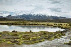 Korkad Parinacota för snö vulkan Arkivbild