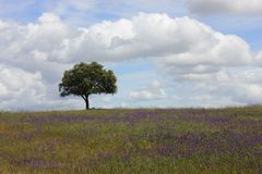 Korken-Baum Lizenzfreie Stockfotografie