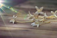 Korkenbaumblume stockbilder