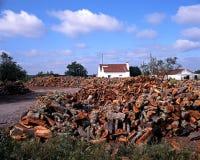 Korkowy dąb uprawia ziemię, Portugalia. Zdjęcia Royalty Free