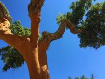 Korkowy drzewo - Portugalia Krajowy drzewo zdjęcia stock