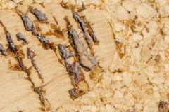 Korkowy podłogowy zbliżenie Zdjęcie Royalty Free
