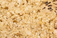 Korkowy podłogowy zbliżenie Zdjęcie Stock