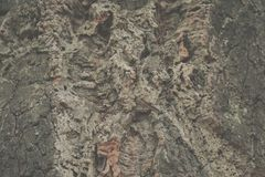 Korkträd barkeeperen abstrakt bakgrundsekkork arkivbild