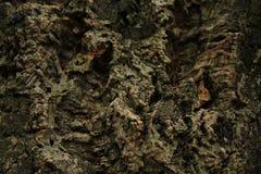 Korkträd barkeeperen abstrakt bakgrundsekkork royaltyfria bilder