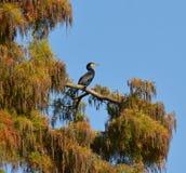 Kormoran auf dem Baum Lizenzfreie Stockfotos