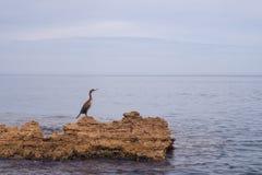 Kormoran, der auf den Felsen mitten in dem Meer steht Lizenzfreies Stockfoto