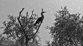 Kormoran na drzewie zdjęcia stock