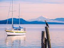 Kormoran na stosach przy brzeg Sidney, BC, Vancouver wyspa, C fotografia stock
