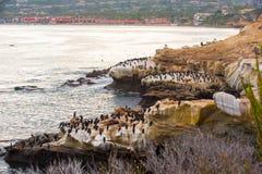 Kormoran und Seelöwen auf einem Felsen Lizenzfreie Stockfotos