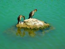 Kormorane auf einem Felsen, der im Meer reflektiert wird lizenzfreies stockfoto