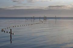 Kormorane auf Fischen-Stangen Lizenzfreie Stockbilder