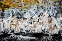 Kormorankolonin på randigt och kulört vaggar i beaglekanalen, Ushuaia, Tierra Del Fuego, Argentina royaltyfri fotografi