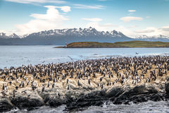 Kormoranseevogelinsel - Spürhund-Kanal, Ushuaia, Argentinien lizenzfreies stockfoto