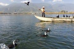 kormoranu porcelanowy połów Zdjęcia Stock