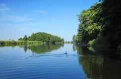 Kormoranu ptak w rzece, Lithuania Obrazy Royalty Free