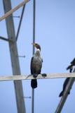kormoranu ptasi morze obrazy royalty free