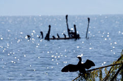Kormoranvögel in See prespa, Macedonia lizenzfreie stockfotografie