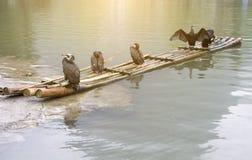 Kormorany i bambusowa tratwa Obrazy Royalty Free