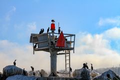 Kormorany na straż przybrzeżna punktu obserwacyjnego stacji zdjęcie stock