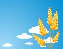 Kornähren auf einem Hintergrund des blauen Himmels Stockbilder