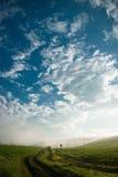 Korn av havre och himmel Arkivbilder