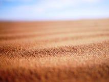 Korn av Sahara- sand Fotografering för Bildbyråer