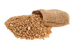 Korn av vete i en säck Royaltyfri Bild